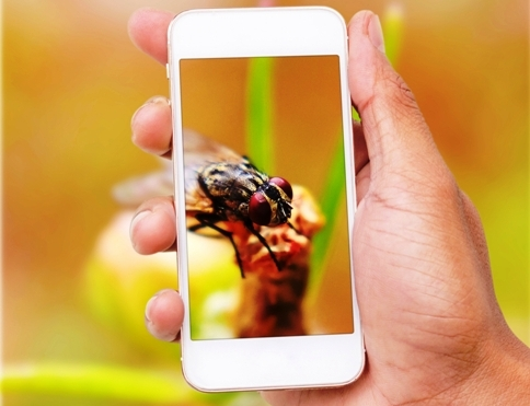 bug phone dreamstime m 76609260 484x318