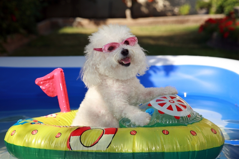 dog in pool boat dreamstimemedium 77015612 768x512