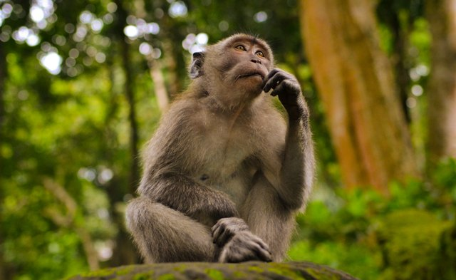 monkey thinking carefully