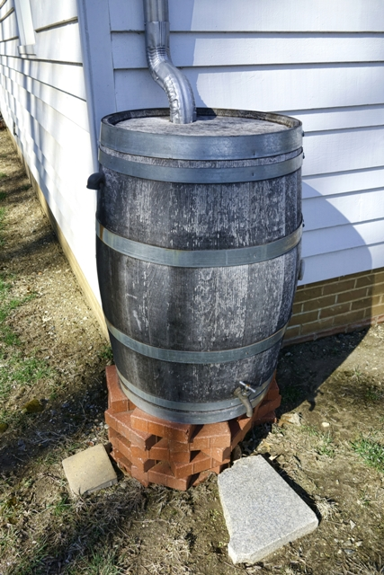 rain barrel dreamstime m 39561177 427x640
